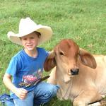 For sale: Club calves, Brahman and Maine-Anjou show calves.